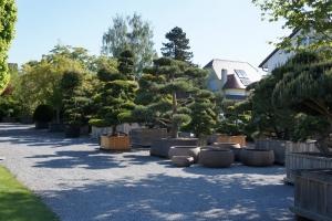 Christoph-Ulmer-Baumschulen-Weilheim-Teck-Gartenbonsai-Baumpark-Pinus-Bonsai