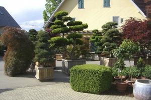 Christoph-Ulmer-Baumschulen-Weilheim-Teck-Gartenbonsai-gartenbonsai_00